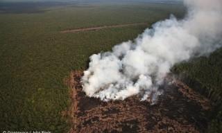 Boicot.-Colgate-Palmolive-Johnson-Johnson-y-Pepsico-deforestan-Indonesia