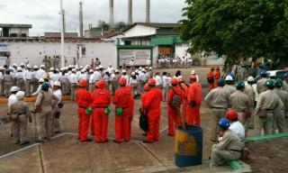 pajaritos-trabajadores-BUENA-1024x768