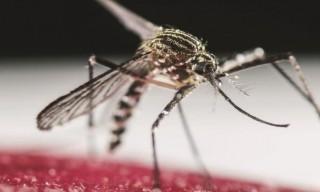 zika-guerrero